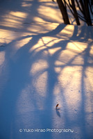 Follen lone leaf in snow in winter_